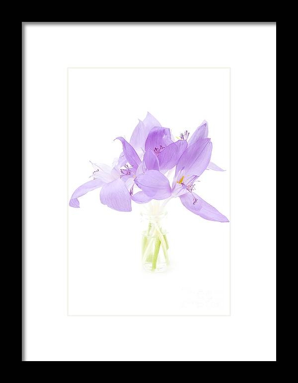 Delicate Framed Print featuring the photograph Delicate by Gabriela Insuratelu
