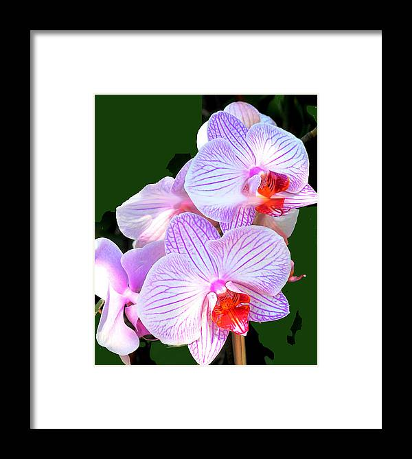 Flower Framed Print featuring the photograph Delicate by Ian MacDonald