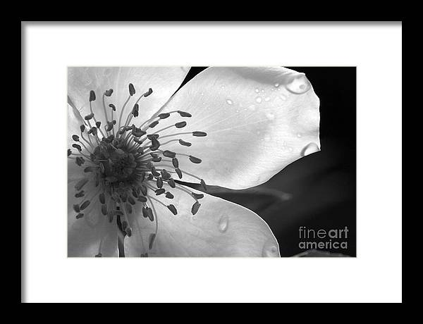 Flower Framed Print featuring the photograph Delicate by Jeannie Burleson