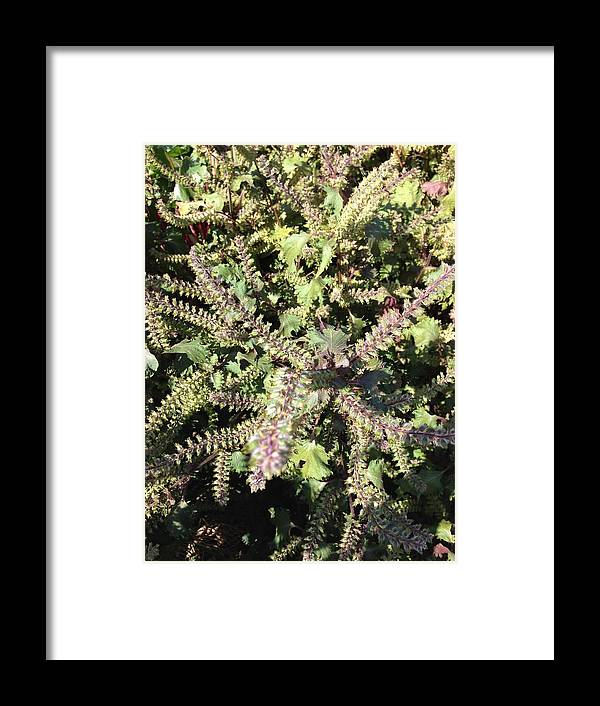 Green Framed Print featuring the photograph Delicate by Margaret Howieson