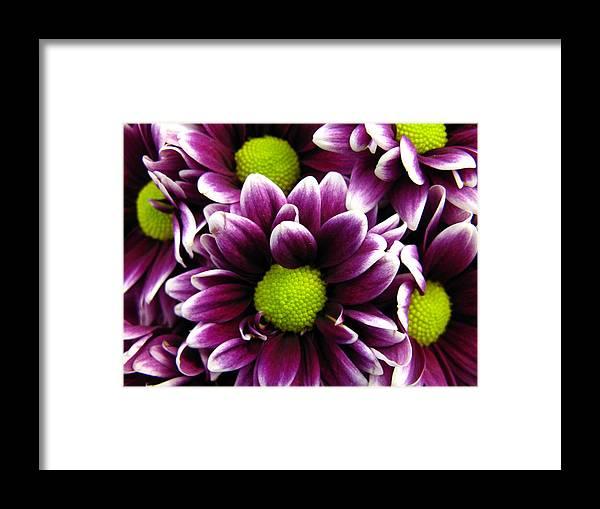 Purple Framed Print featuring the photograph Delicate Purple by Rhonda Barrett