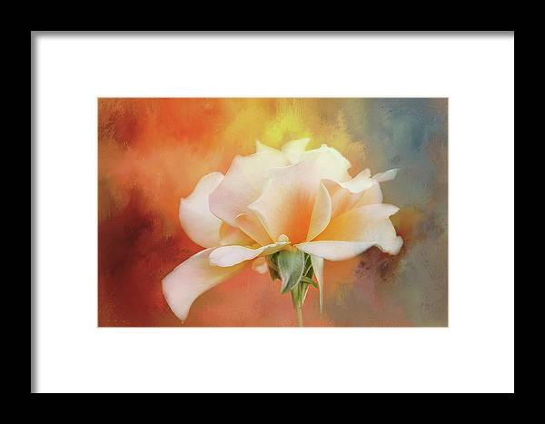 Photography Framed Print featuring the digital art Delicate Rose On Color Splash by Terry Davis