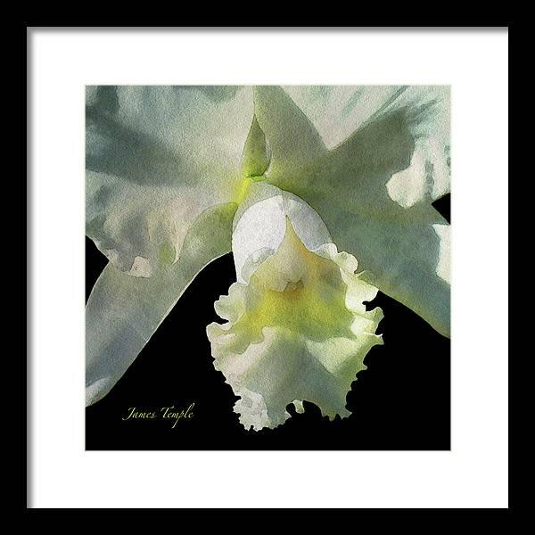 White Orchid Framed Print featuring the digital art Delicate Digital Watercolor by James Temple