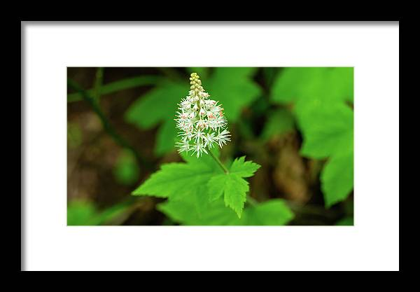 Georgia Framed Print featuring the photograph Delicate Wildflower Georgia Mountains by Lawrence S Richardson Jr