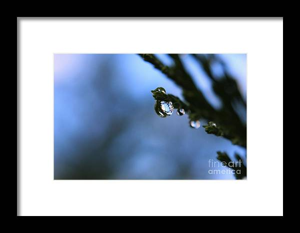 Macro Framed Print featuring the photograph Delighted By Droplets by Dee Winslow