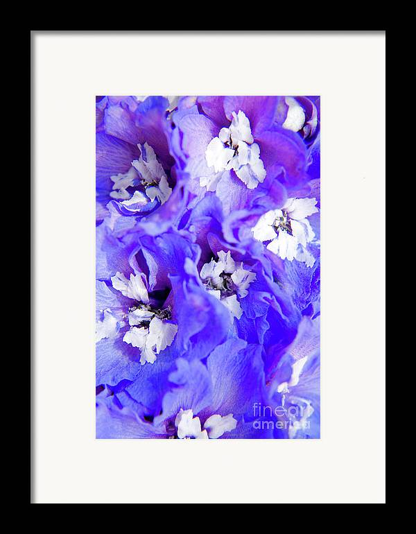 Nature Framed Print featuring the photograph Delphinium Flowers by Julia Hiebaum