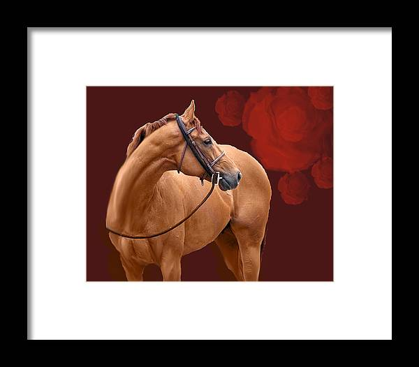 Thoroughbred Framed Print featuring the painting Derby Cousin by Kim