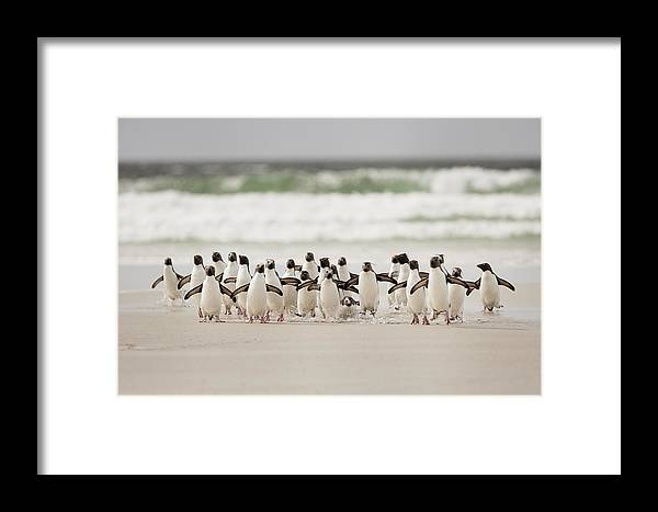 Nature Framed Print featuring the photograph Desembarco by Joan Gil Raga