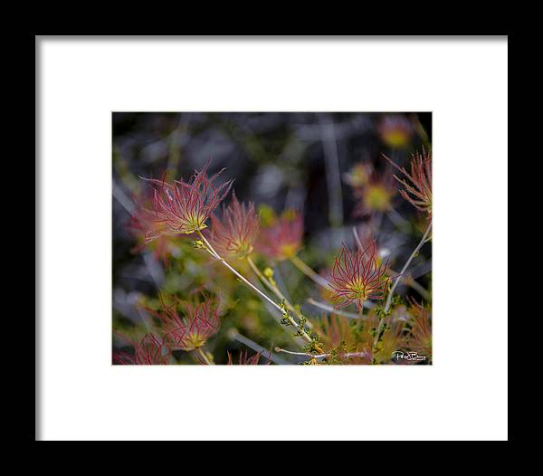 Desert Framed Print featuring the photograph Desert Flower by Patrick Boening