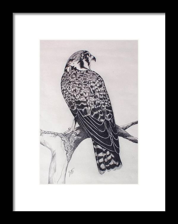 Hawk Framed Print featuring the drawing Desert Hawk II by Suzette Kallen