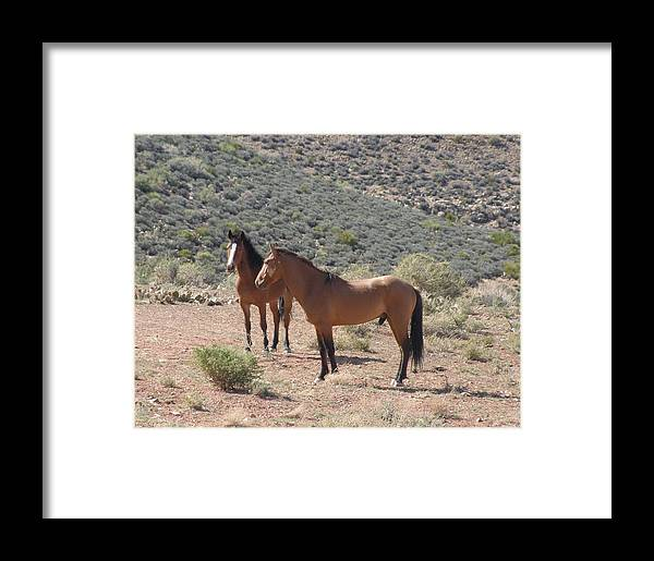 Animals Framed Print featuring the photograph Desert Horses by Jeanette Oberholtzer
