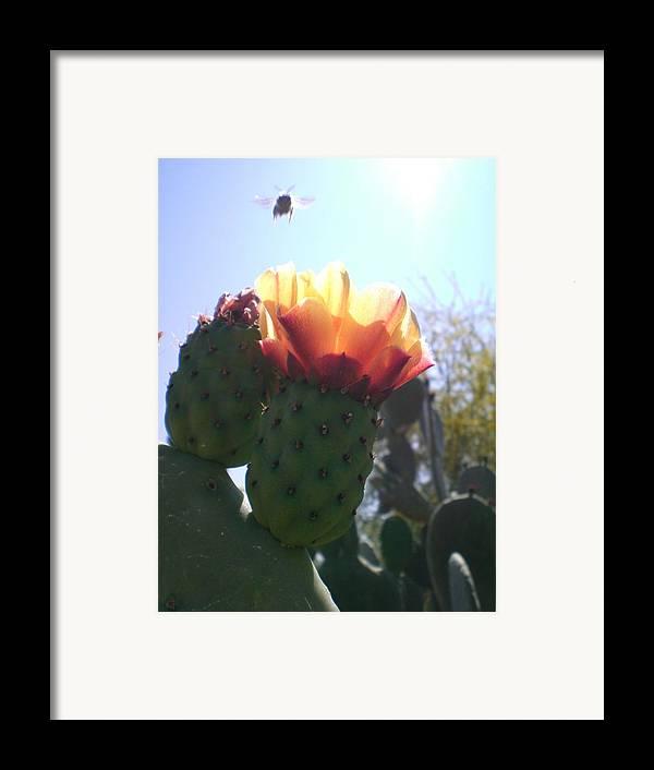 Cactus Framed Print featuring the photograph Desert Jewels II by Aleksandra Buha