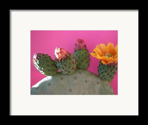 Cactus Framed Print featuring the photograph Desert Jewels IIi by Aleksandra Buha