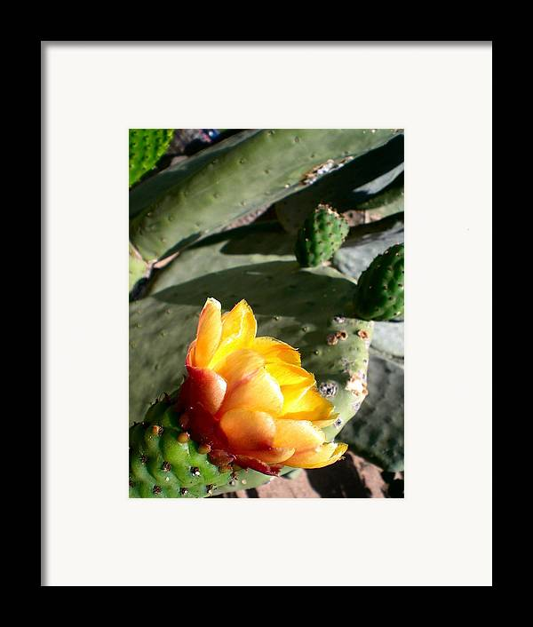 Cactus Framed Print featuring the photograph Desert Miracle by Aleksandra Buha