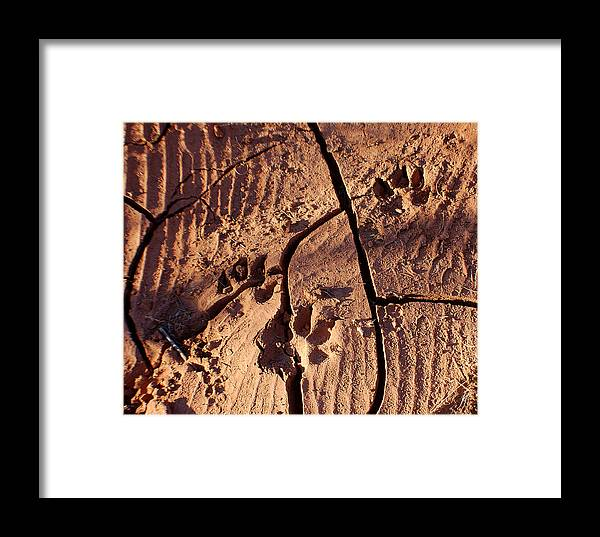Photography Framed Print featuring the photograph Desert Paw Prints by Heather S Huston