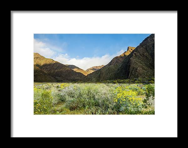 Wildflowers Framed Print featuring the photograph Desert View by Jerry Sellers