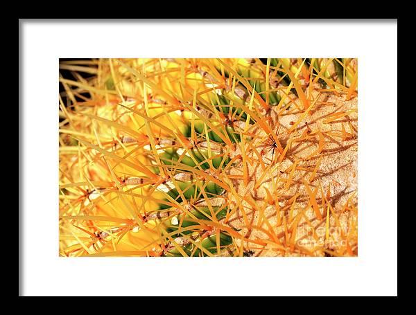 Desert Web Framed Print featuring the photograph Desert Web by John Rizzuto