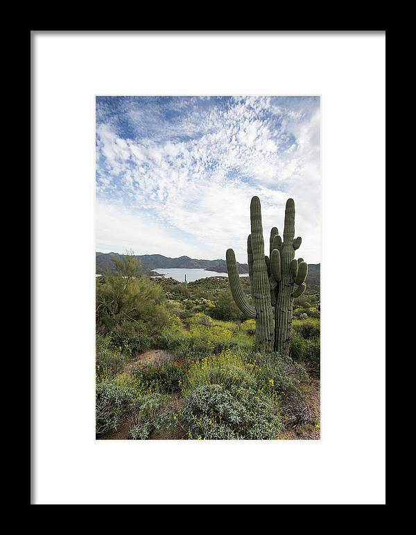 Arizona Framed Print featuring the photograph Desert Wildflower View by Cathy Franklin