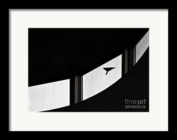 Bird Framed Print featuring the photograph Desire by Vadim Grabbe