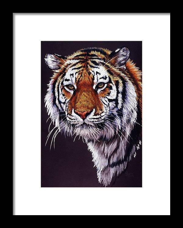 Tiger Framed Print featuring the drawing Desperado by Barbara Keith