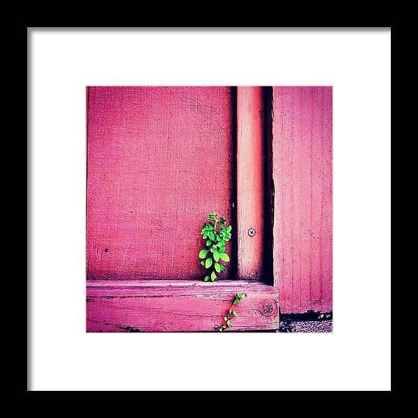 Pink Framed Print featuring the photograph Determination by Julie Gebhardt
