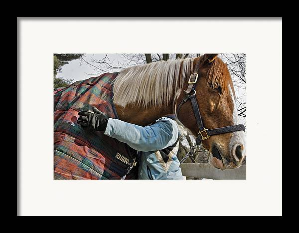Horse Framed Print featuring the photograph Devotion by Jack Goldberg