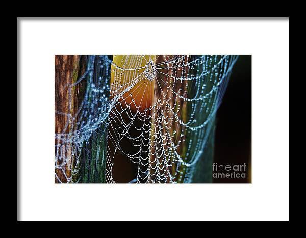 Dew Framed Print featuring the photograph Dew Covered Web by Julie Adair