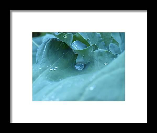 Green Framed Print featuring the photograph Dew Drop by Robert Gebbie