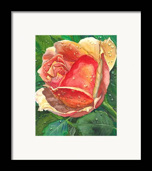 Floral Framed Print featuring the painting Dew Drop Rose by Robert Thomaston