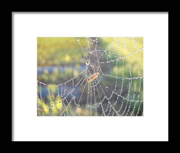 Morning Dew Framed Print featuring the photograph Dew Drops On A Spider Web by Kent Lorentzen