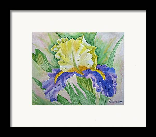 Flowers Framed Print featuring the painting Dew Drops Upon Iris.2007 by Natalia Piacheva