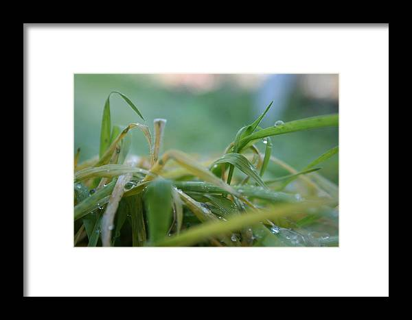 Dew Framed Print featuring the photograph Dew Grass by Joshua Sunday