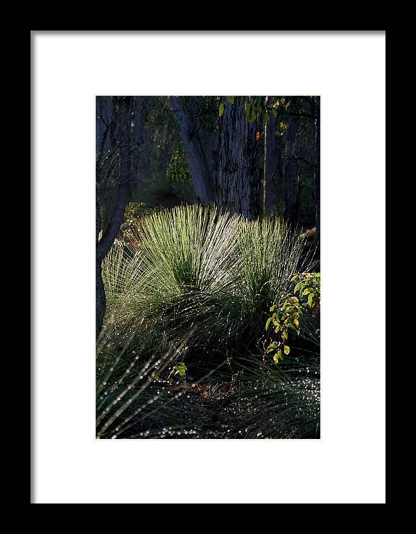 Plant Framed Print featuring the photograph Dew On A Grass Tree by Tony Brown