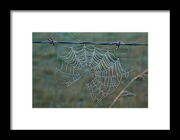 Spider Framed Print featuring the photograph Dew On The Web by Douglas Barnett