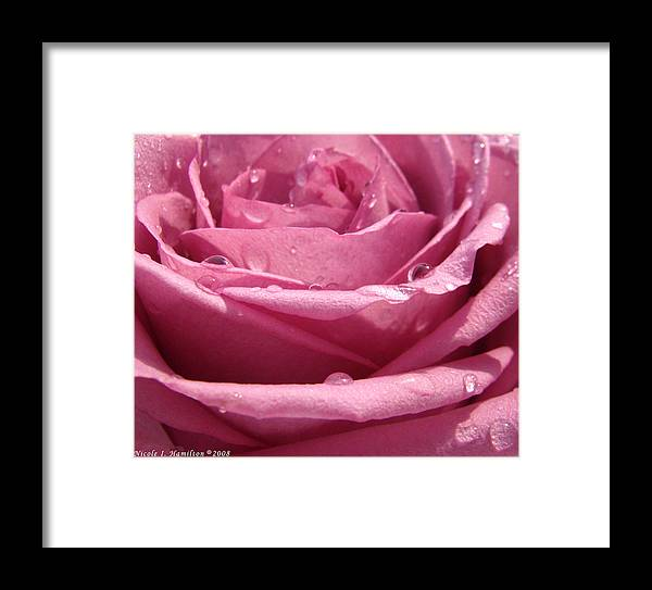 Rose Framed Print featuring the photograph Dewy Rose by Nicole I Hamilton
