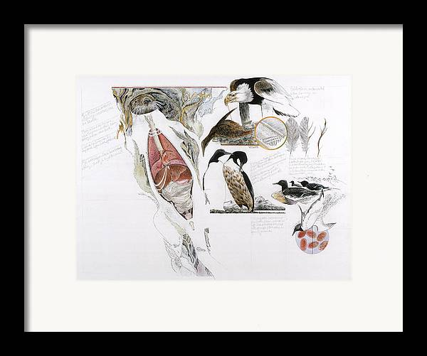 Biology Framed Print featuring the photograph Diagram Of The Effects Of Oil And Oil by Jack Unruh