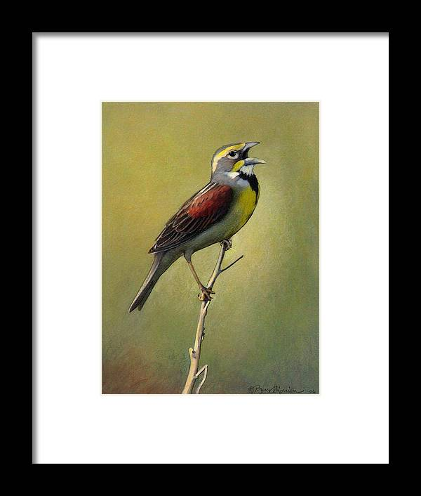 Birds Framed Print featuring the drawing Dickcissel Summer Song by Bruce Morrison