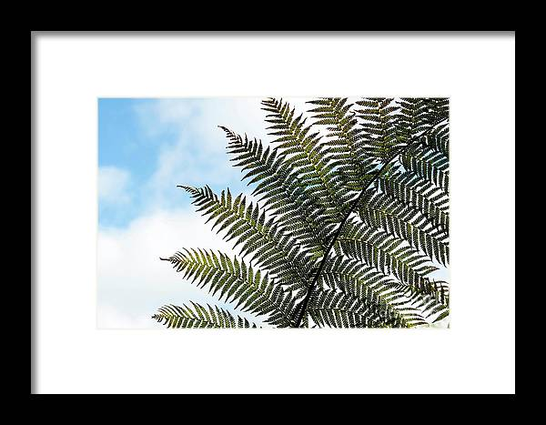 Dicksonia Antarctica Framed Print featuring the photograph Dicksonia Frond by Tim Gainey