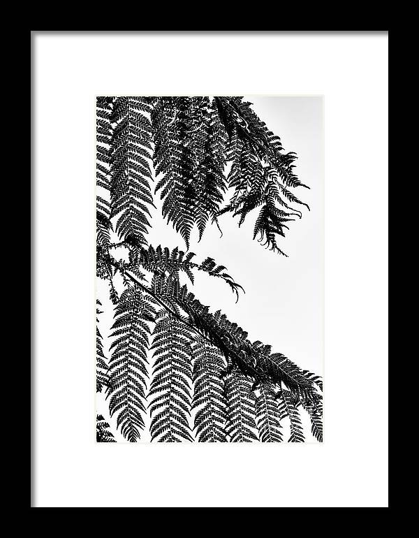 Dicksonia Antarctica Framed Print featuring the photograph Dicksonia by Tim Gainey