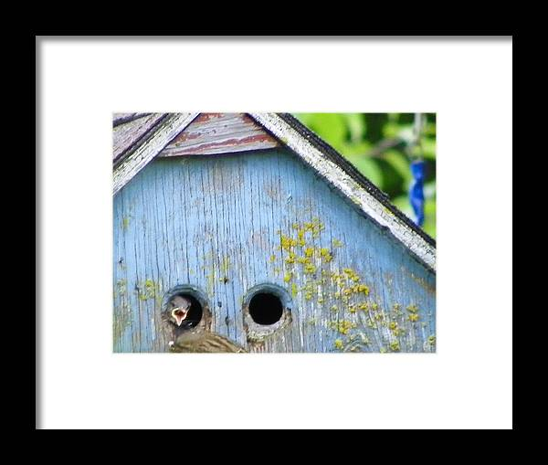 Digital Photography Framed Print featuring the photograph Dinnertime by Laurie Kidd