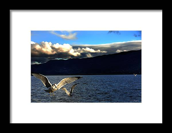Landscape Framed Print featuring the photograph Dinning At Sunset by Richard Gordon