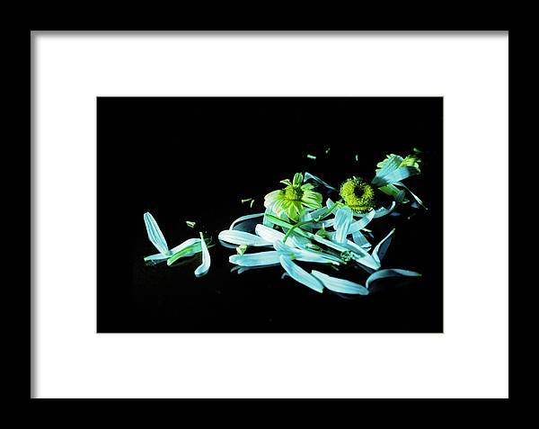 Flower Framed Print featuring the photograph Disappointment by Johnny Aguirre