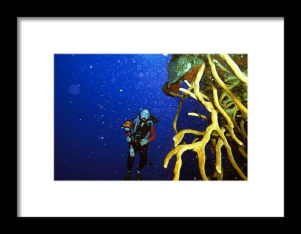 Dive Framed Print featuring the photograph Diving The Wall At Little Cayman by Carl Purcell