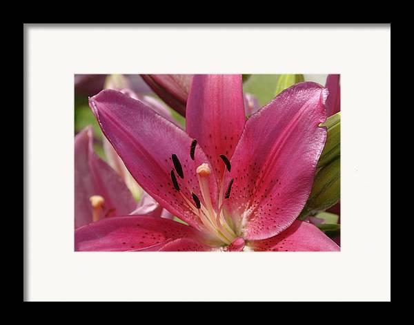 Flower Framed Print featuring the photograph DL by Ed Zirkle