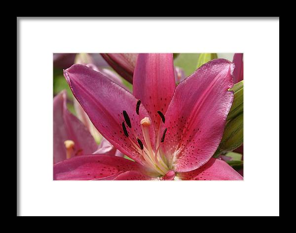 Flower Framed Print featuring the photograph DL by Ed Zirkle