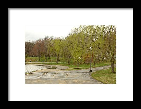 Landscape Park Washington Willow Tree Lake Framed Print featuring the photograph Dnrf0401 by Henry Butz