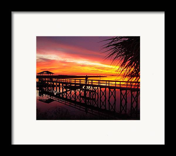 Palms Framed Print featuring the photograph Docking It by Debbie May