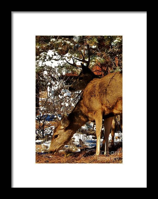 Winter Framed Print featuring the photograph Doe And Buck by CL Redding