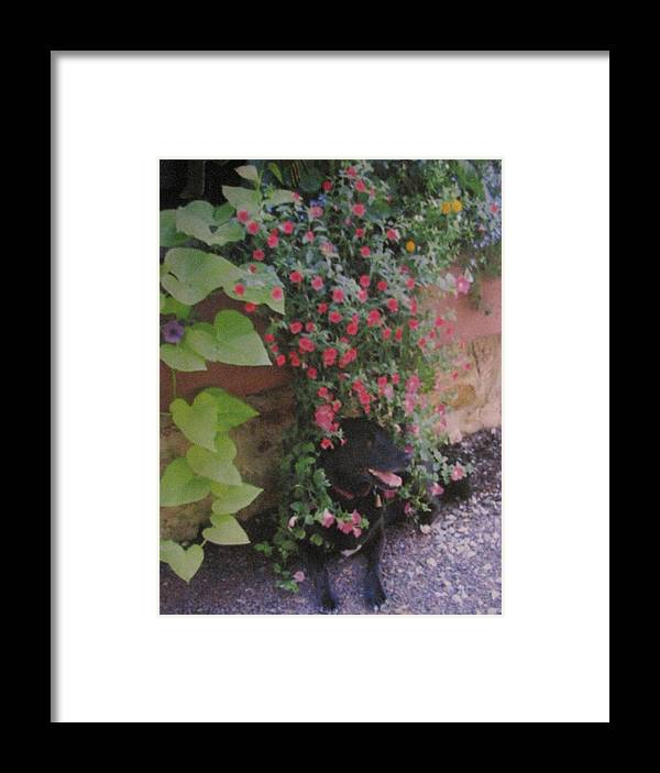 Dog Framed Print featuring the photograph Dog In Bloom by Belinda Consten