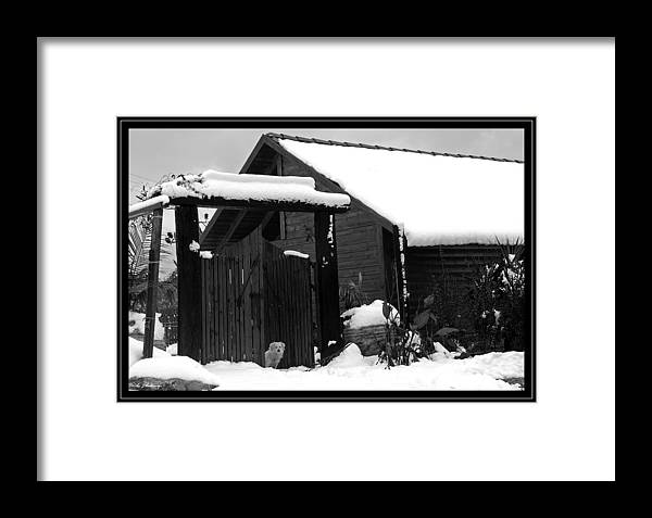 Dog Framed Print featuring the photograph Dog In Snow by Arik Baltinester